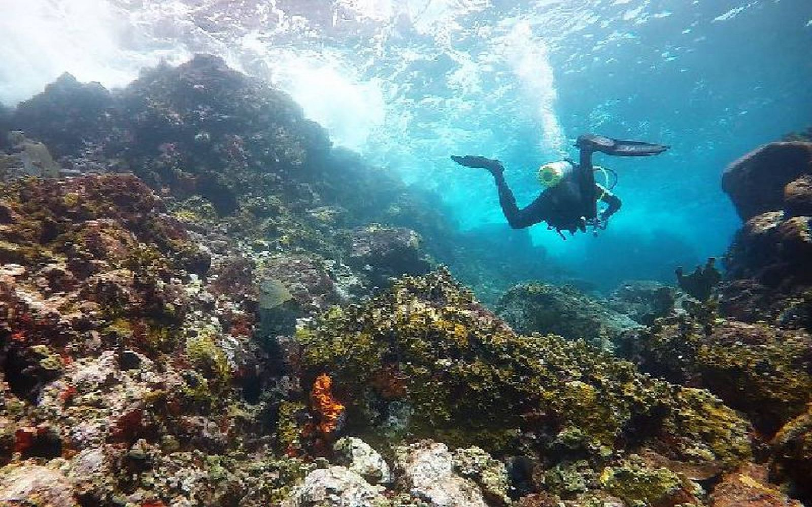 Dive Sisters Rocks Carriacou